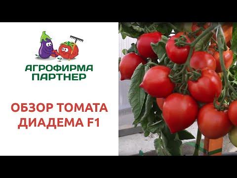 ОБЗОР ТОМАТА ДИАДЕМА F1