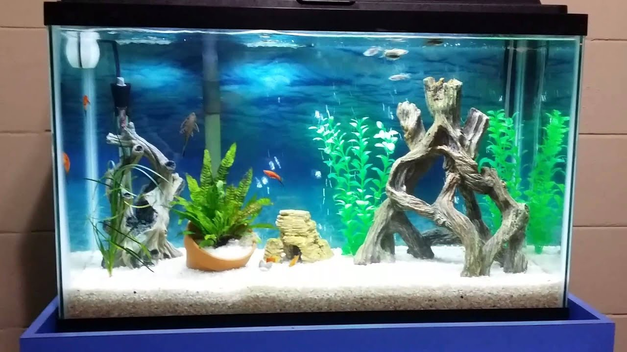 30 gallon freshwater fishtank setup youtube for Freshwater fish tank setup