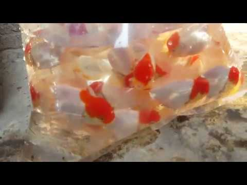 Goldfish Packing For SELL