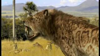 Walking with Beasts Se1 - Ep05 Sabre Tooth - Part 02