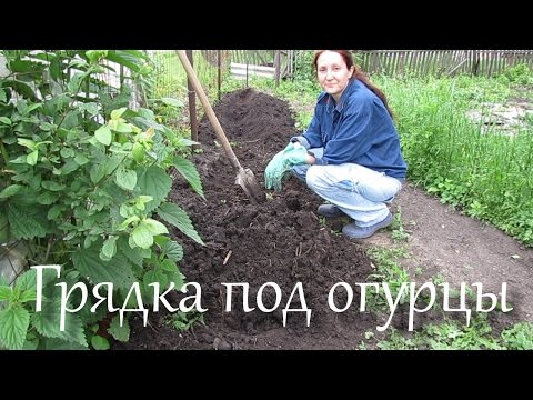 Грядка для выращивания огурцов.