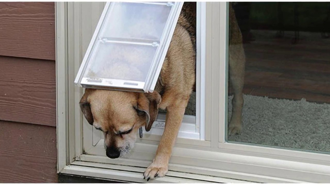 Sliding Glass Pet Door How To Measure Your Pet Advanced Window