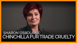 Baixar Sharon Osbourne Exposes Cruel Chinchilla Fur Trade