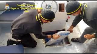 Maxi sequestro di droga: fermata imbarcazione con 300 kg di droga