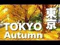 TOKYO JAPAN 東京紅葉•明治神宮外苑のイチョウ並木 GingkoTrees Avenue in tokyo 東京観光 日本の紅葉