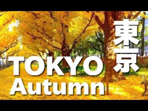 TOKYO JAPAN 東京紅葉•明治神宮外苑のイチョウ並木 GingkoTrees Avenue in tokyo 東京観光 日本の紅葉 秋の東京