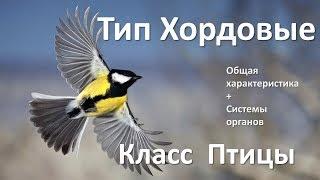15.1 Птицы часть I (7 класс) - биология, подготовка к ЕГЭ и ОГЭ 2018