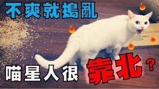 【豆漿 - SoybeanMilk】大解密!! 貓咪很靠北的傳言 到底是怎麼來的?