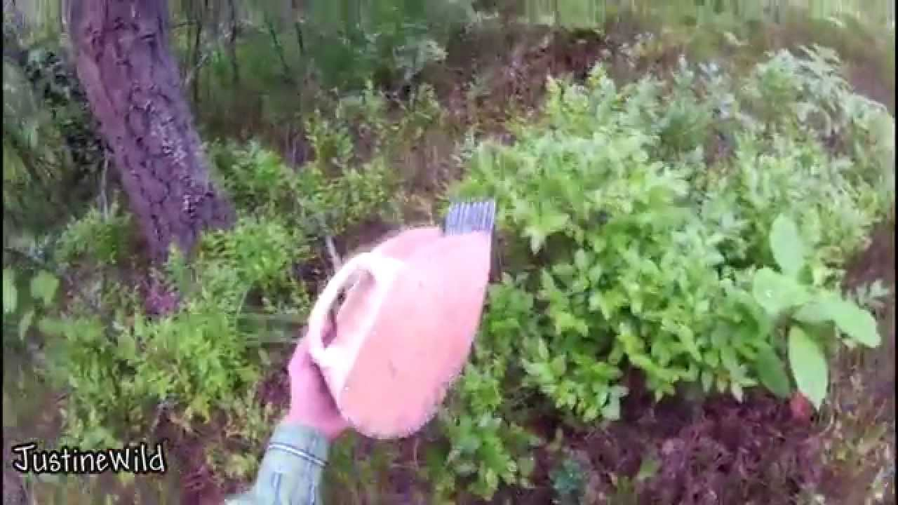 Комбайн для сбора малины - YouTube