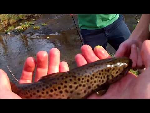 Trout Fishing at Donegal Creek (Lancaster County PA)