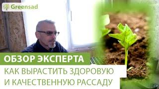 видео 6 секретов выращивания здоровой рассады