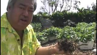 George Kahumoku Jr. - Hawaiian Farmer - Part 1