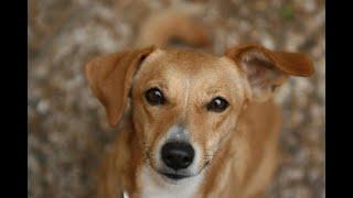 Киста Дермоидная   - у собаки