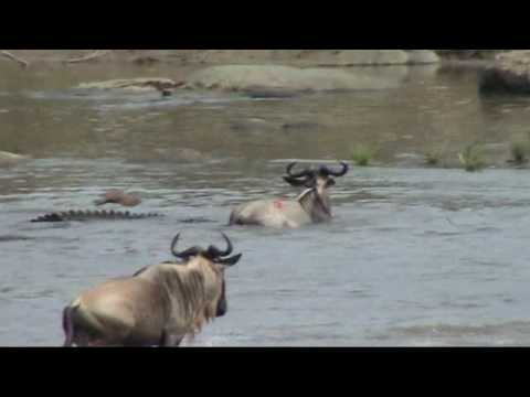 Serengeti: Battle at the Mara river; Great migration in the Serengeti
