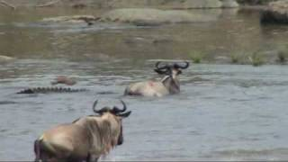 Serengeti: Battle at the Mara river; Great migration in the Serengeti