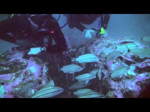 """Reefs Revealed"" Intruder Planes Reef, St. Augustine Florida"