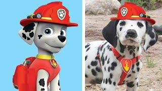 تعرف على الحياة الحقيقية لعشرة كلاب من دوريات المخلاب