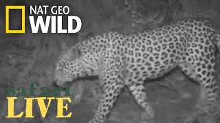 Safari Live - Day 167 | Nat Geo Wild
