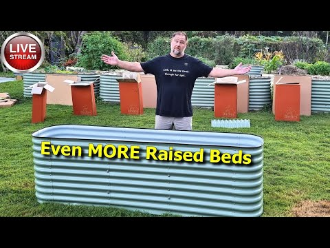 Why I'm Building MORE Raised Garden Beds?