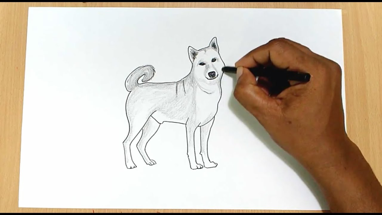 It is a graphic of Lucrative Drawing Picture Of Dog