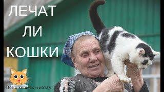 Лечат ли кошки..Как кошки лечат людей?