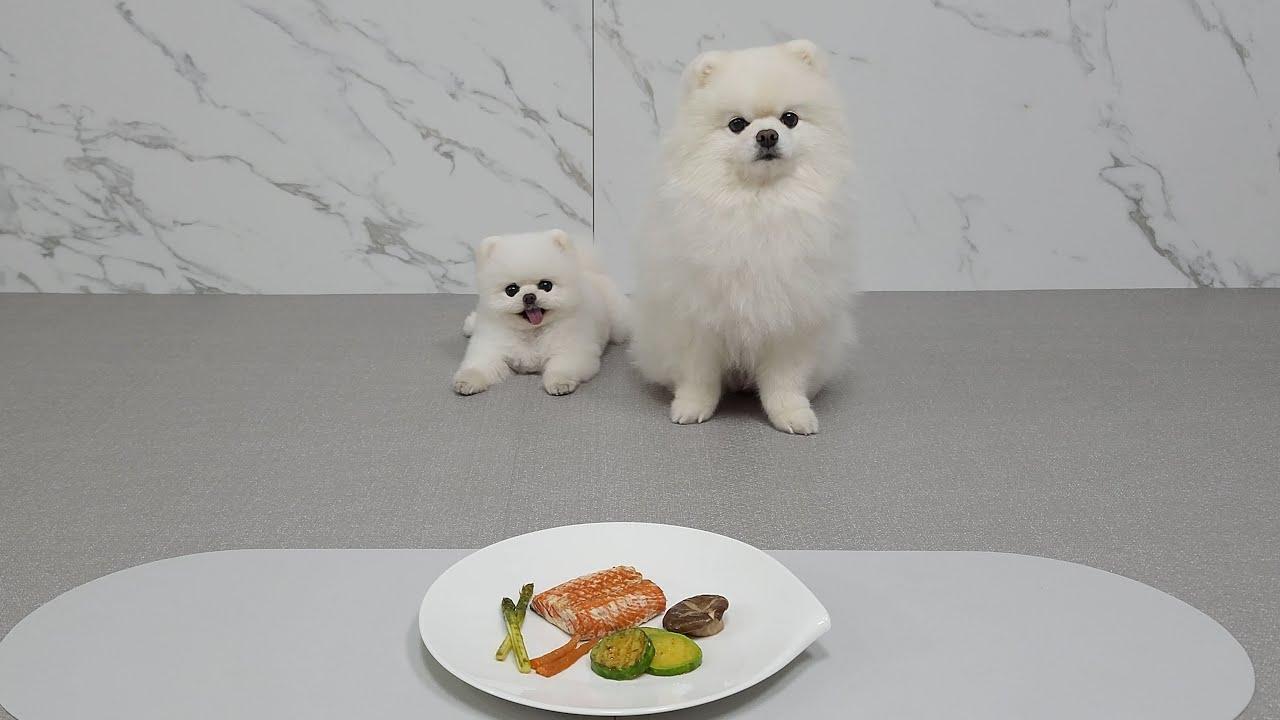 강아지 앞에 스테이크를 놓고 기다려! 하고 나가면 생기는 일