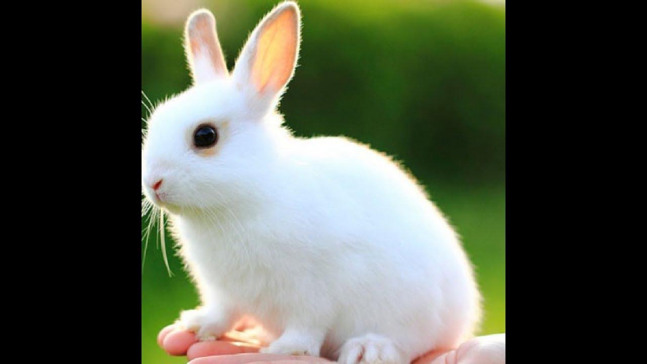 تفسير رؤية الأرانب في المنام تفسير حلم الأرانب Youtube
