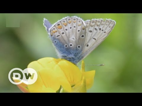 Counting butterflies to combat climate change | DW English