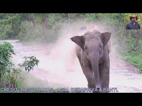 Elephant Chasing.