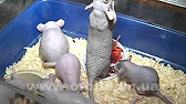 Как обустроить дом для крысы :) - YouTube