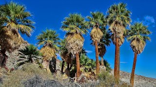 Located in southern Anza-Borrego, Mountain Palm Springs is a great ...