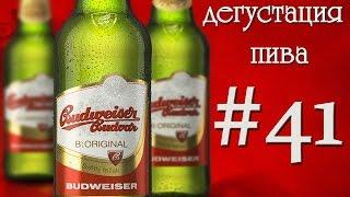 Дегустация пива #41 - чешский Budweiser Budvar! 18+(, 2015-12-22T16:34:41.000Z)