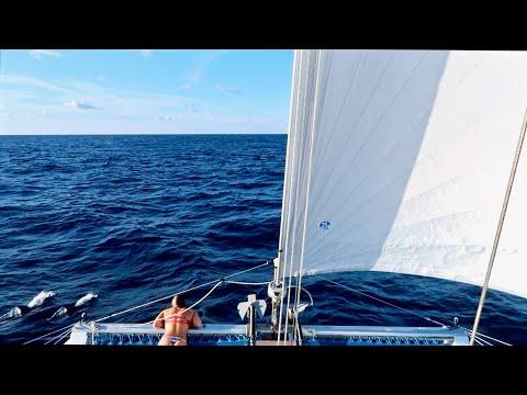 Good Company on the High Seas!! 🐬