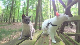 Tutorial: How NOT to Walk a Cat on Leash  12 Common Mistakes