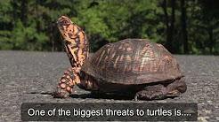 NC Zoo Brake for Turtles 2018