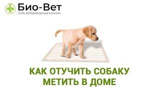 Собака Метит Что Делать & Как Отучить Собаку Метить В Доме. Ветклиника Био-Вет