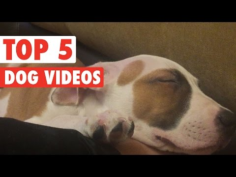 Top 5 Funny Dogs Compilation || Feb 26 2016
