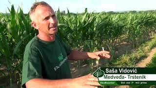 Resavanje problema sa herbicidom na jabukama , Sasa Vidovic , Medvedja-Trstenik 2019.