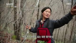 한국기행 - Korea travel_봄나물열전 3부 지용씨네가 산골로 간 까닭은_#001