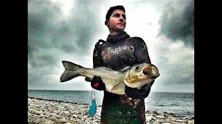 çupra-orata-3.4 kg - Mağaralarda ve agaşonda zıpkınla balık avı