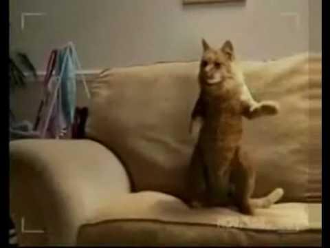 Video clip- Mèo nhảy hip-hop