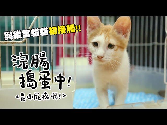 黃阿瑪的後宮生活-浣腸搗蛋中-與後宮貓貓初接觸
