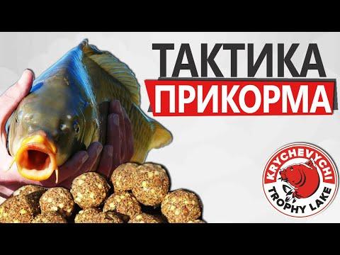 Как правильно кормить рыбу? ЛУЧШАЯ ТАКТИКА ЛОВЛИ