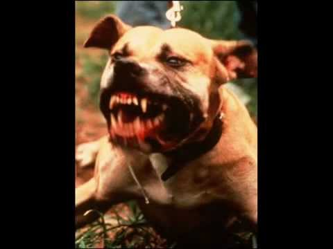 5อันดับสุนัขที่โหดที่สุด