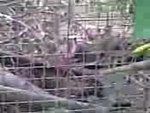 waschbären laute die 2. - YouTube