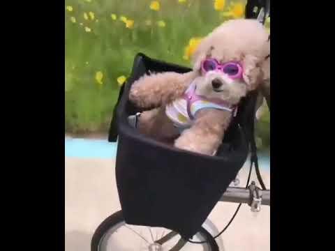 Video Divertenti Cagnolino In Bici Via Col Vento Youtube