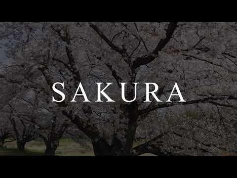 【Free material】SAKURA-OHANAMI - KODAMA HONJO SAITAMA JAPAN