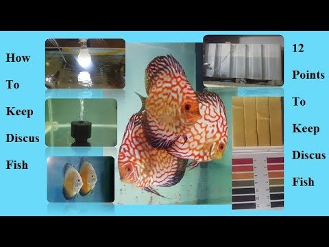 How To Keep Discus Fish Successfully
