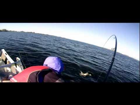 видео ловля пассивной щуки