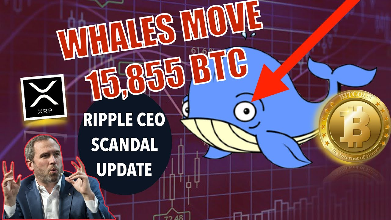 BREAKING NEWS! Whales Move MASSIVE Amounts of Bitcoin! Ripple CEO Sell-Off Update & Miners TRIGGERED 6